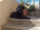 Bild anklicken und Ihr könnt sehen wo Equest (Rosi) heute lebt. (In Italien)